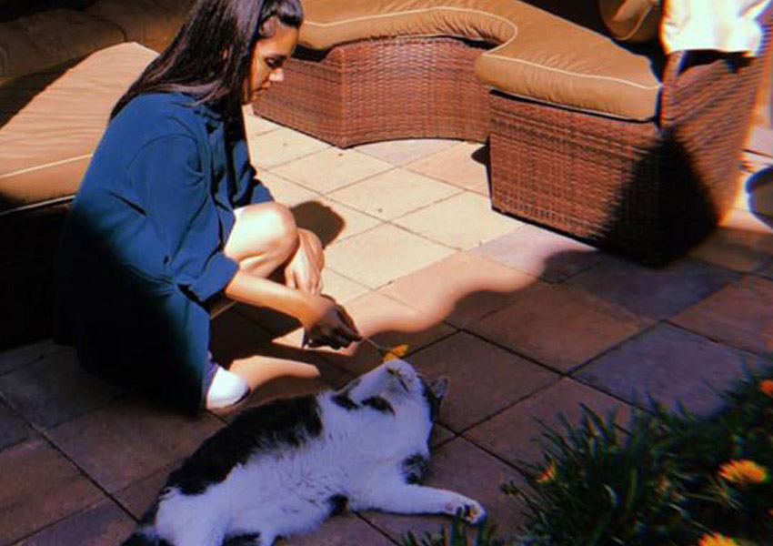 In The Spotlight!: Five Celebrities And Their Feline Roommates!